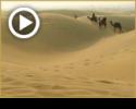 פרשת במדבר