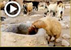 משל המלך בגלות אצל הרועה צאן | ניקיון פסח הקדוש