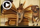 משל הג' כלבים, ג' שרים, ג' ספרים נפתחים