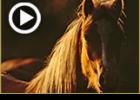 הסוס הגנוב